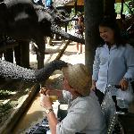Feeding the elephants with driver Auan