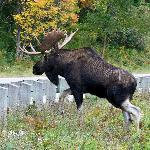 Mr Moose along the way