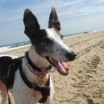 Sapphire on beach 2008
