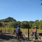Wine Country Bikes - Day Tours