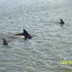 Dolphins seen on evening boat cruise