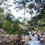 Eungella National Park