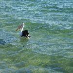 Foto di Ettalong Beach Tourist Resort