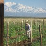 View from picture window, Mendoza vineyard