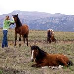 myself with the gentle, loving, wild horses