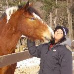 The beautiful horses you ride