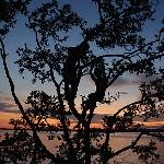 Kids silhouetted climbong tree at sunset