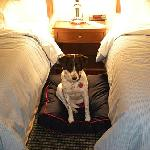 The Sheraton Sweet Sleeper Dog Bed
