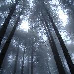 Kanatal: Trees, Mist & Mysterious