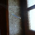 coton tige en levitation dans les toiles d araigne
