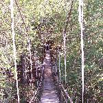 bridge to star gazer cabin