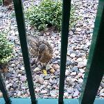 feeding the ducks on the patio