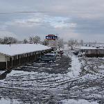 Snowy longhorn