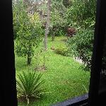 window view to garden