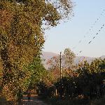 Foto de Finca Santa Anita