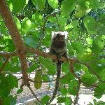 Uno de los pequeñísimos monos, en los árboles del jardin