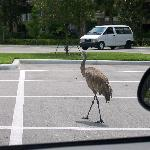 they had these huge birds just walking around outside the hotel!! lol