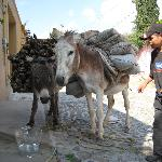 Providing water for the locals