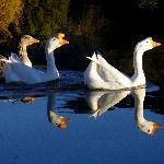 Pond inhabitants