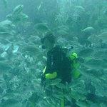 Diver feeding fish inside aquarium in Dubai Mall