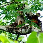 spotted monkeys