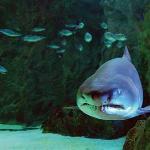 Grotte des requins