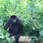 Monkey at Casa Chameleon