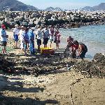 turistas, pescaderos y pelicanos