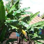 a few banana trees makes you feel like you are on holidays