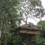 And the Tree House