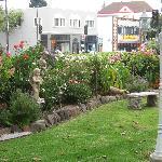 Front lawn - RGI