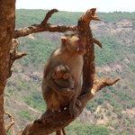 Monkey Point ...?