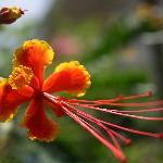 Flowers in Kathy's backyard