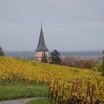 Vineyards - Alsace near Ribeauville