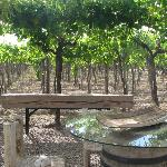 Wine and dine under the vines