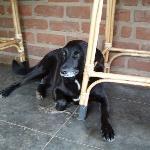 Friendly dog Gundaa @ Jungle Retreat