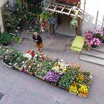 The florist is open for business (view from room)
