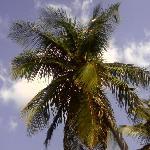 Royal Palms Foto