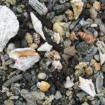 shells in sand on secluded beach nearby