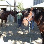 Great horses!