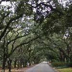 Magnolia Springs