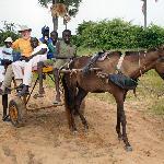 to Mar Fafako by horsecart