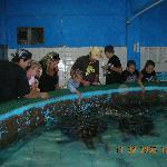 Sea Turtle pool