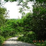 Route to Jog Falls