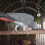 Jorgos the hotel parrot
