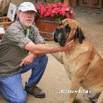 Lead Dog Greets Visitor At Puro Caballo near Casablanca, Chile