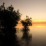 sunrise-mangroves 12-06-08