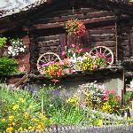 a flower garden in the Alps
