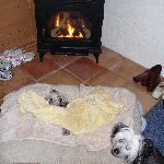 fireplacepups