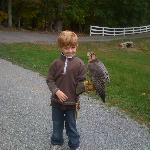 Our 6 year old holding the Falcon